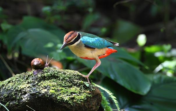 Фото обои улитка, камень, птица