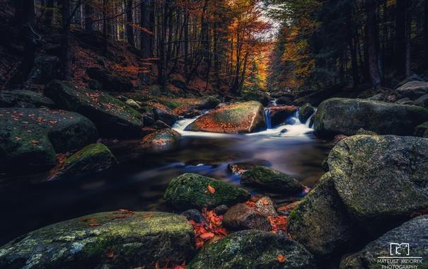 Фото обои природа, лес, осень
