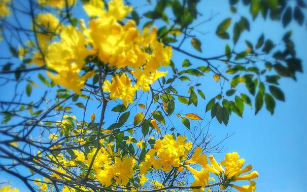 Фото обои небо, цветы, дерево, ветка