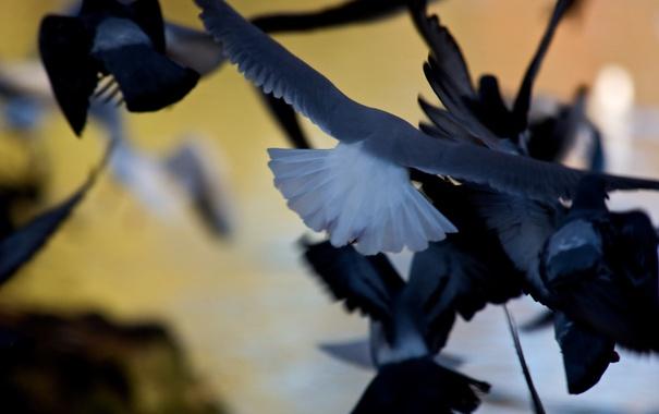 Фото обои птицы, фон, полёт