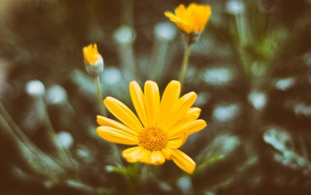Фото обои цветы, желтые, лепестки