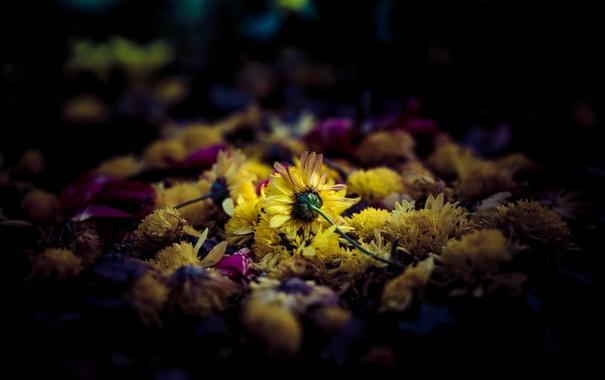 Фото обои фон, природа, цветы