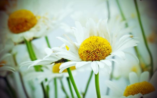 Фото обои flowers, bokeh, petals, stalks