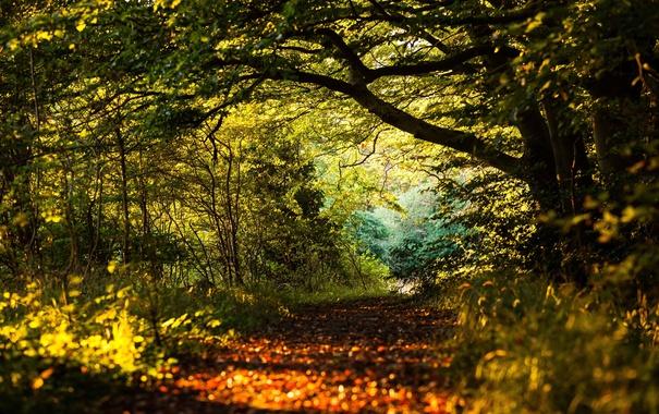 Фото обои путь, солнце, деревья, тени, лес, листья