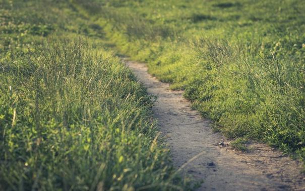 Фото обои зелень, лето, дорожка, тропинка