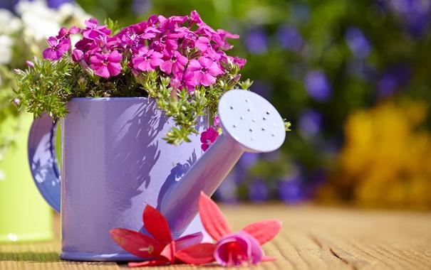 Фото обои цветы, лейка, бутоны