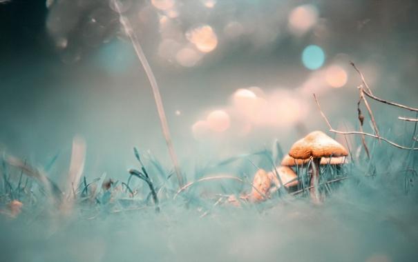Фото обои природа, фон, грибы