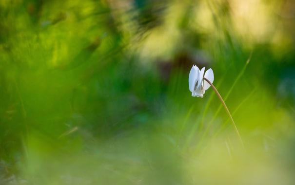 Фото обои зелень, цветок, лето, природа