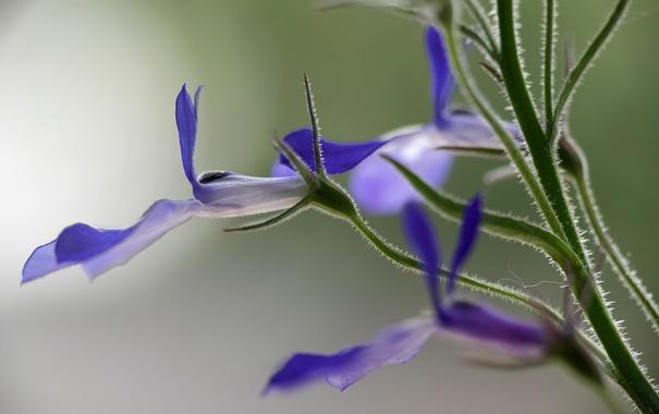 Фото обои цветок, лепестки, стебель, экзотика