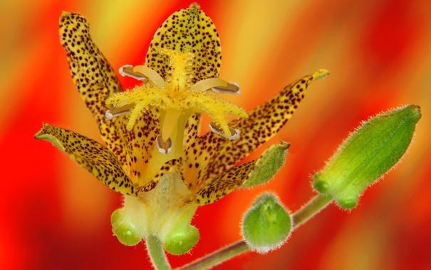 Фото обои цветок, природа, лепестки, экзотика
