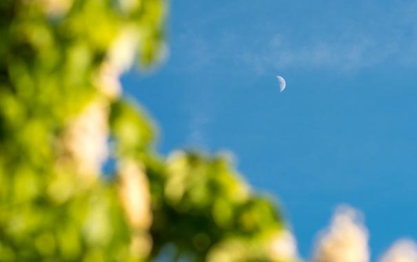 Фото обои небо, месяц, голубое