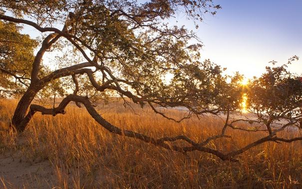 Фото обои трава, солнце, лучи, дерево, изогнутое