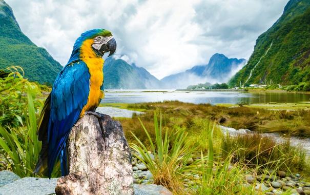 Фото обои пейзаж, попугай, ара, Macaw, Сине-жёлтый ара