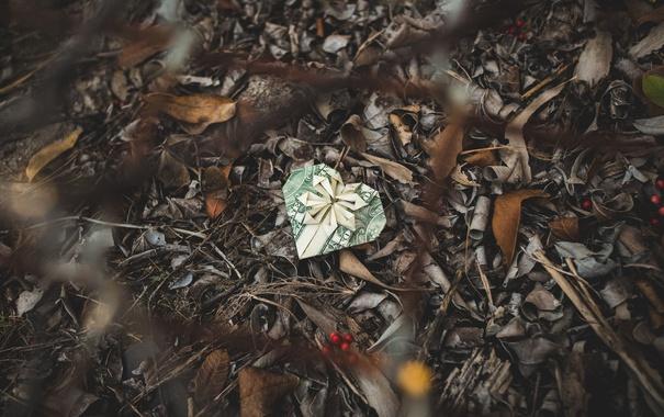 Фото обои листья, ягоды, доллар, боке, подарочная коробка, сетки