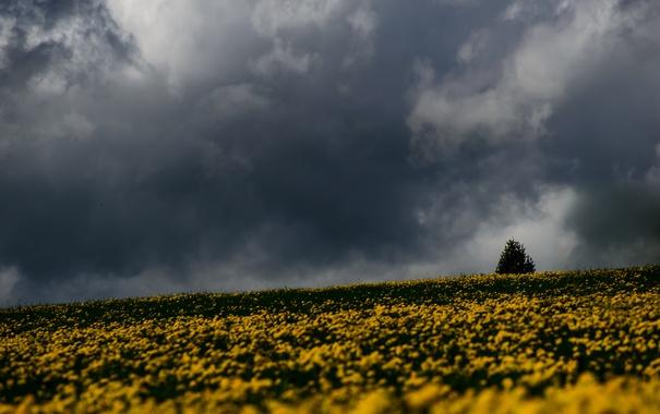 Фото обои storm, trees, field, flowers, gray clouds, rainy