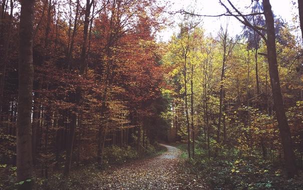 Фото обои зелень, осень, лес, листья, ветки, дорожка