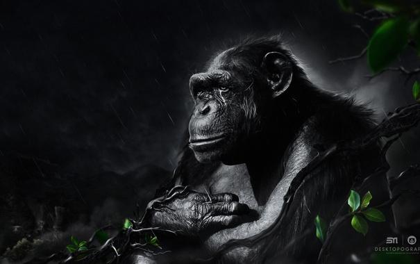 Фото обои листья, ветки, обезьяна, ожидание, desktopography