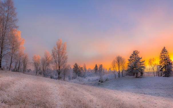 Фото обои зима, иней, поле, снег