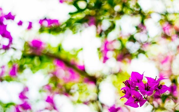 Фото обои природа, весна, цветы