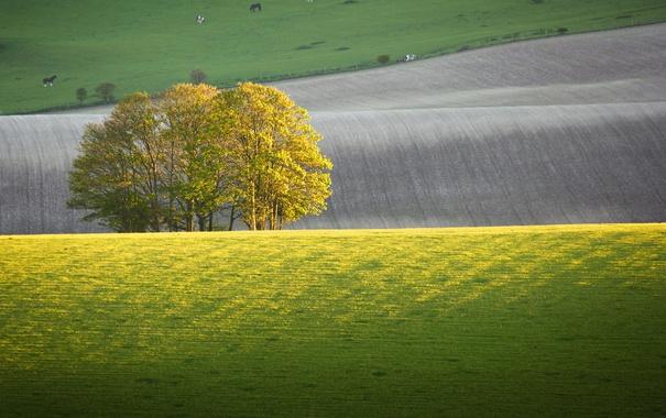 Фото обои поле, животные, деревья, холмы, лошади