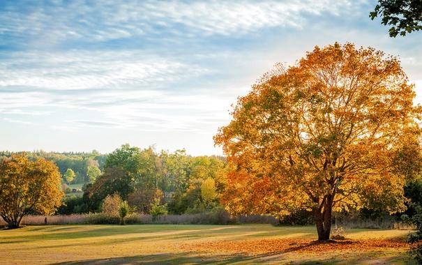 Фото обои осень, листья, деревья, природа, trees, nature, autumn