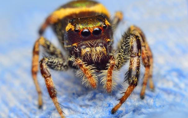 Фото обои насекомое, боке, паучок