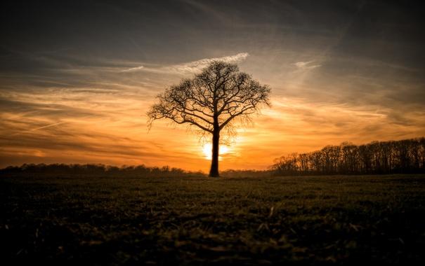 Фото обои поле, природа, дерево, утро