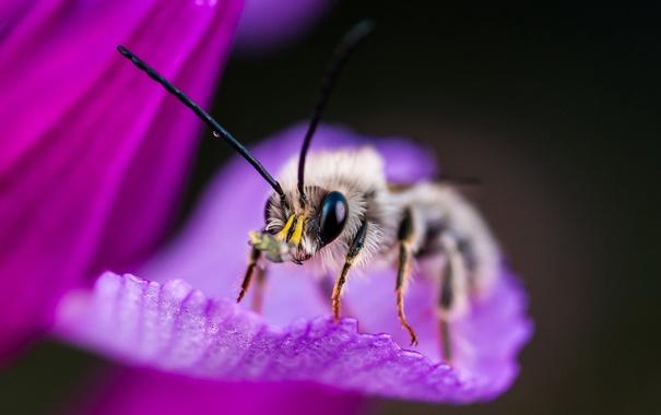 Фото обои макро, фон, насекомое