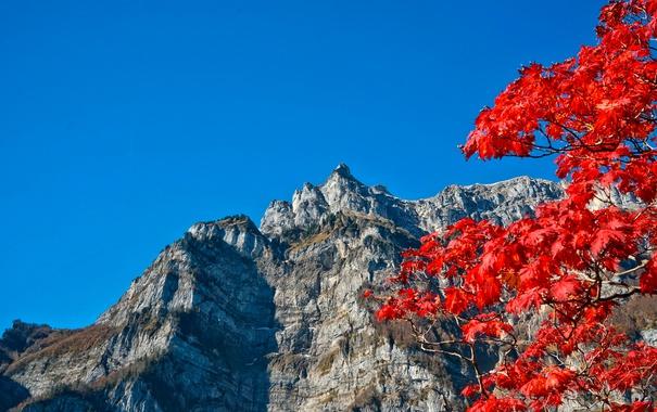 Фото обои осень, небо, листья, горы, ветки, багрянец