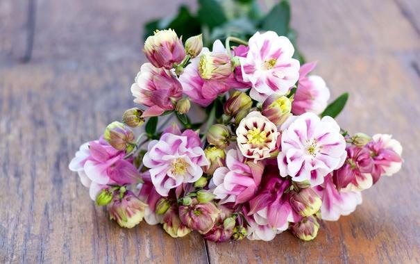 Фото обои цветы, букет, цветение, водосбор
