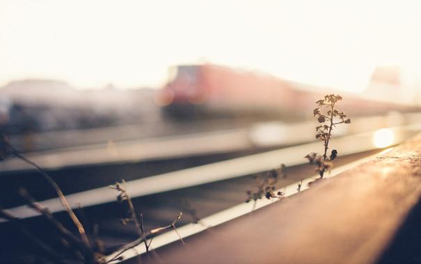 Фото обои трава, фон, железная дорога