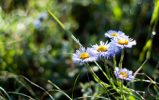 Фото обои лето, цветы, природа, bokeh