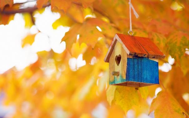 Фото обои осень, природа, домик