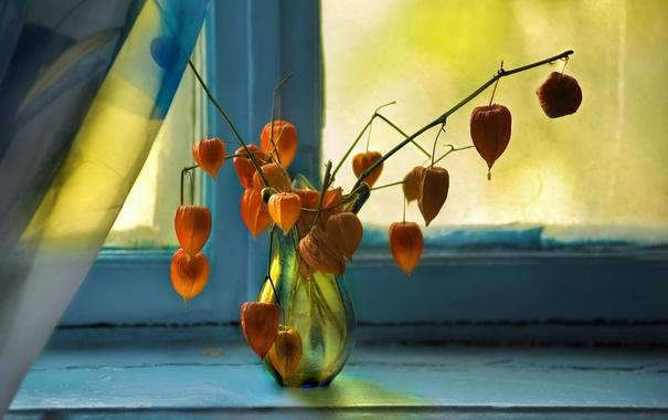 Фото обои цветы, фон, окно