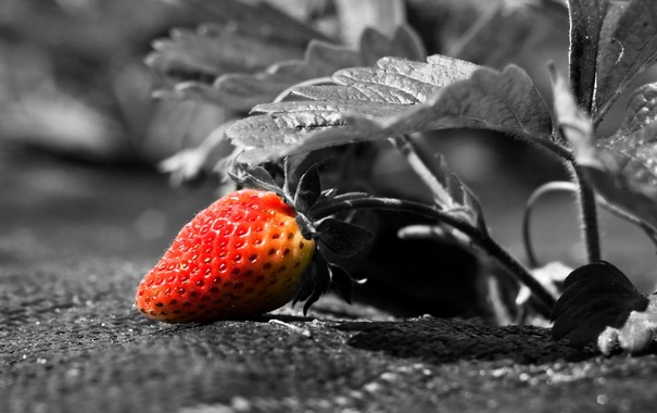 Фото обои фон, клубника, ягода