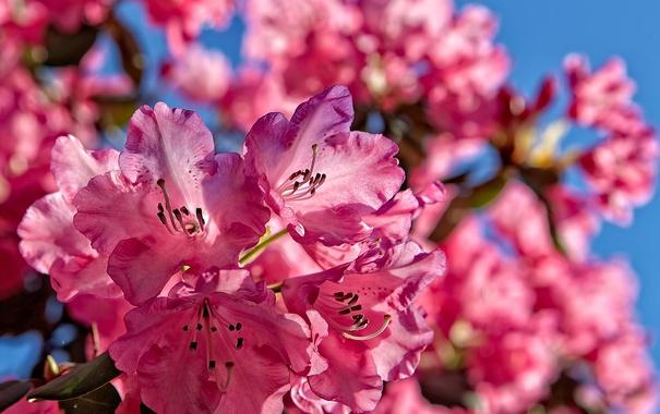 Фото обои небо, природа, лепестки, сад, соцветие