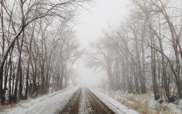 Фото обои road, trees, winter, fog, branches