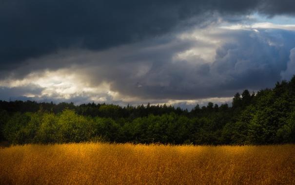 Фото обои поля, серые облака, деревья, гроза