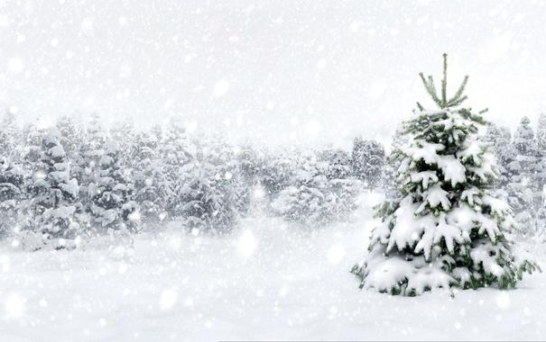 Фото обои winter, лес, nature, елка, снежинки, зима, снег