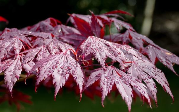 Фото обои листья, вода, капли, макро, природа, день