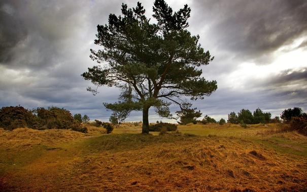 Фото обои поле, небо, трава, природа, фото, дерево