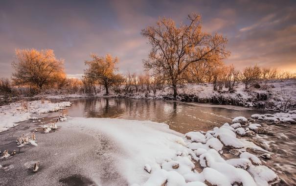 Фото обои зима, река, дерево