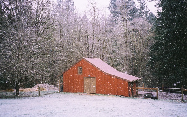 Фото обои trees, winter, branches, farm, shed, snowing