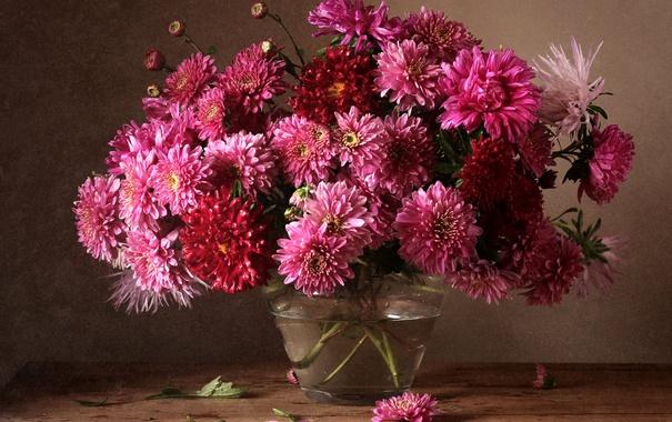 обои на рабочий стол осень цветы хризантемы 6126