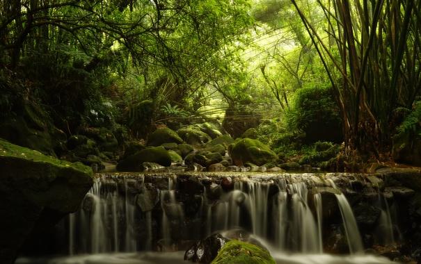 Фото обои поток, лес, каскад, деревья, бамбук
