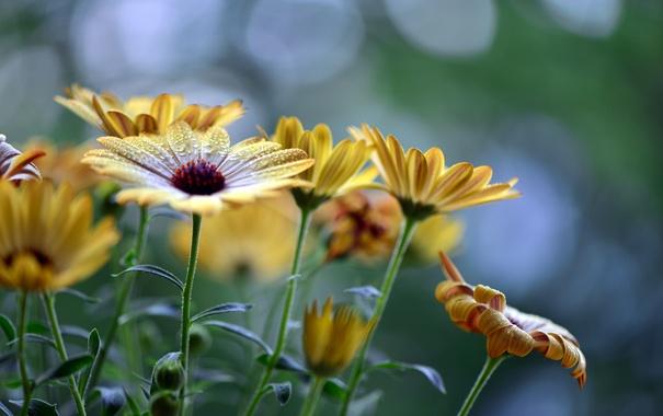 Фото обои капли, цветы, стебли