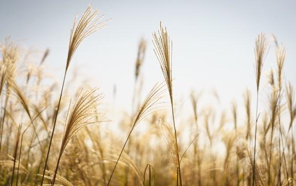 Фото обои небо, трава, стебли, боке