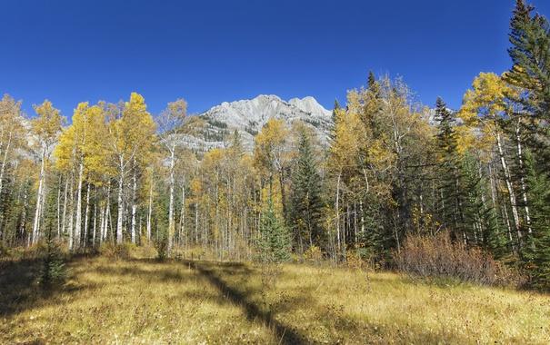 Фото обои горы, небо, осень, деревья, трава