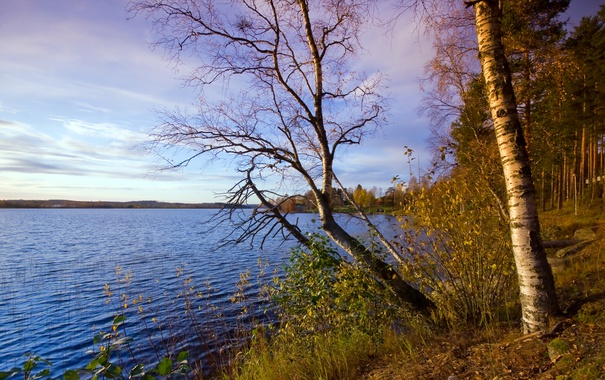 Фото обои forest, water, lake