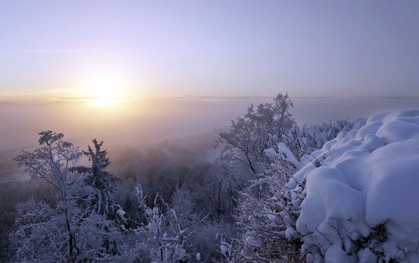 Фото обои снег, туман, утро
